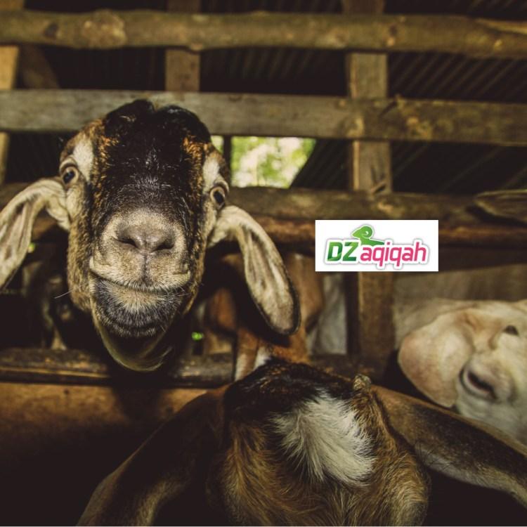 Catering Halal Untuk Aqiqah di Purwakarta