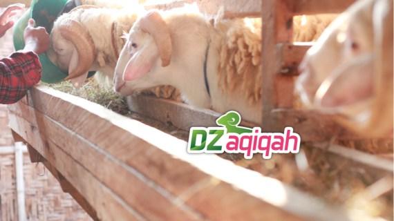 Penyedia Kambing dan Domba di Purwakarta untuk Kurban