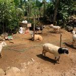 Rumah Ternak untuk Kurban di Purwakarta