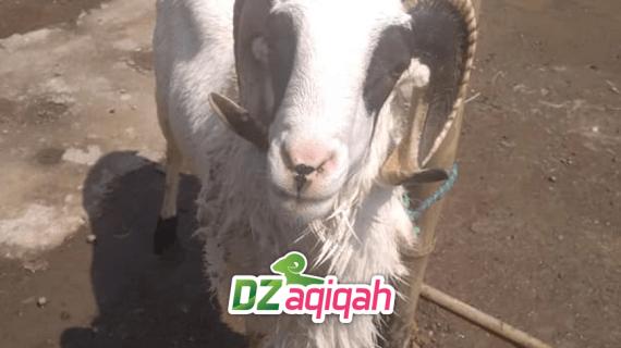 Jasa Aqiqah Dengan Catering Terbaik di Purwakarta