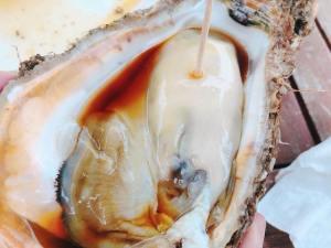 象潟の岩牡蠣