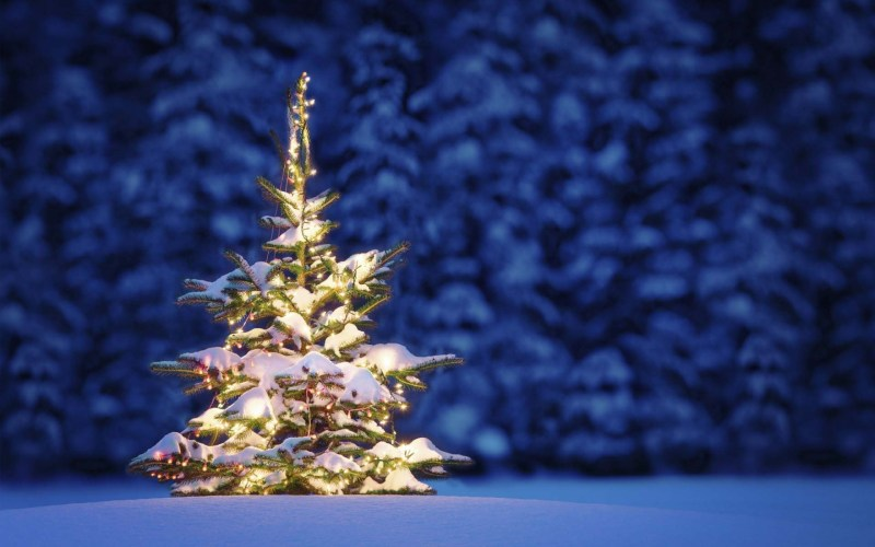 christmas-tree-full-of-snow-in-winter