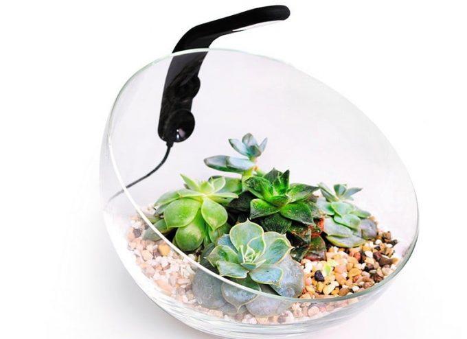 Декоративный аквариумный  набор Wabi Set купить а Киеве с доставкой: цена