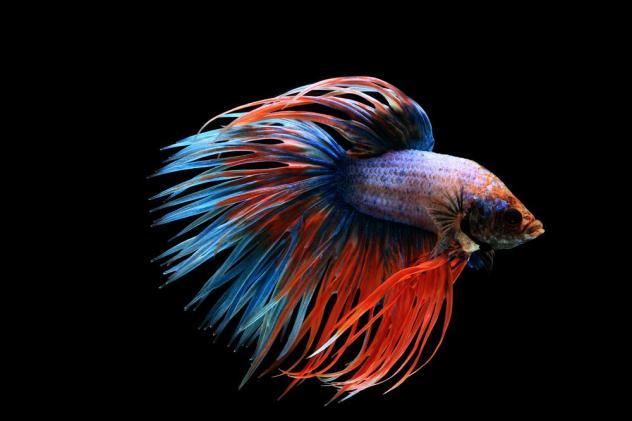 Нано-аквариумы: кратко о кубиках safe image 1 AquaDeco Shop