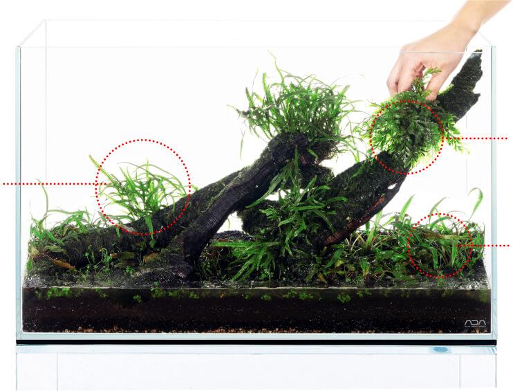 Посадка аквариумных растений среднего плана - инструкция по запуску аквариума ADA