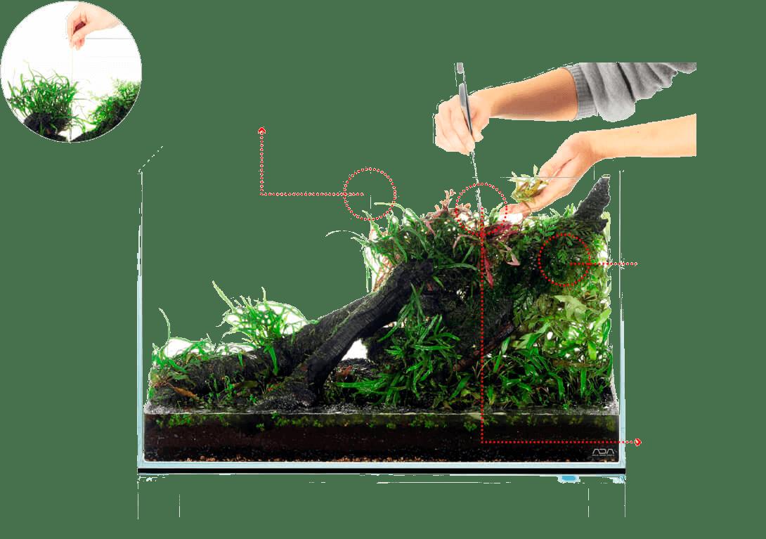 Высадка растений заднего плана по инструкции ADA