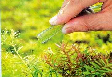 Удаление нитчатых водорослей с аквариума - ADA
