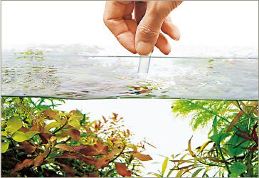 Проверка качества воды перед запуском рыбы - советы Амано