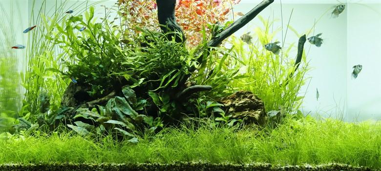 Простые правила запуска аквариума с растениями Getting started AquaDeco Shop