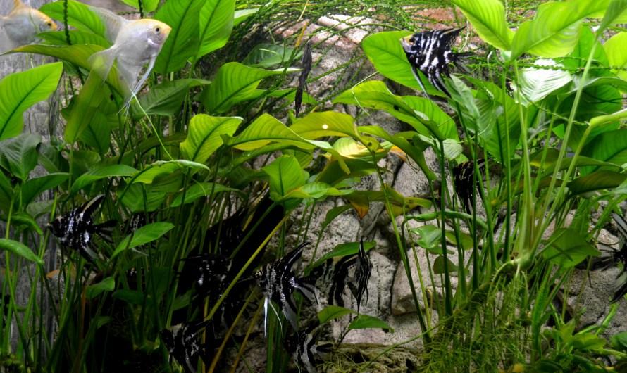 Нужны ли в аквариуме растения?