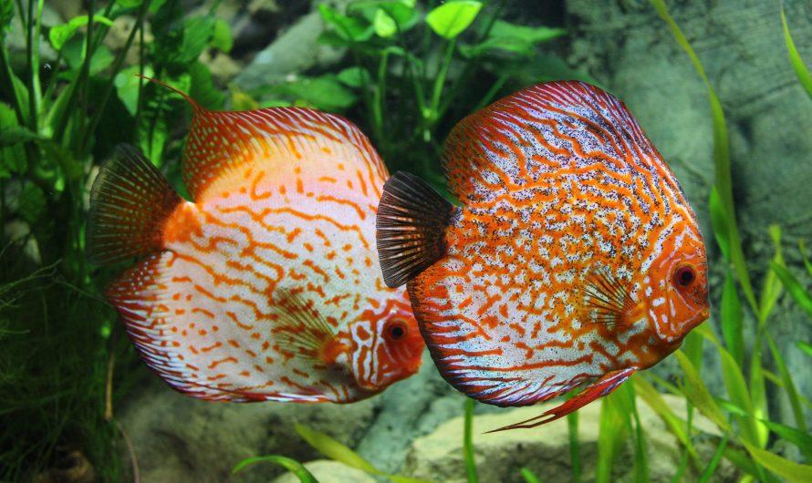10 самых красивых аквариумных рыбок