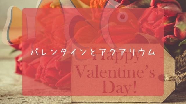 バレンタインとアクアリウム