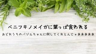 バジル 葉の食害