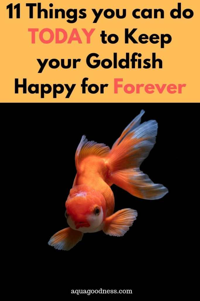 11 Things you can do TODAY to Keep your Goldfish Happy for Forever in your Aquarium image