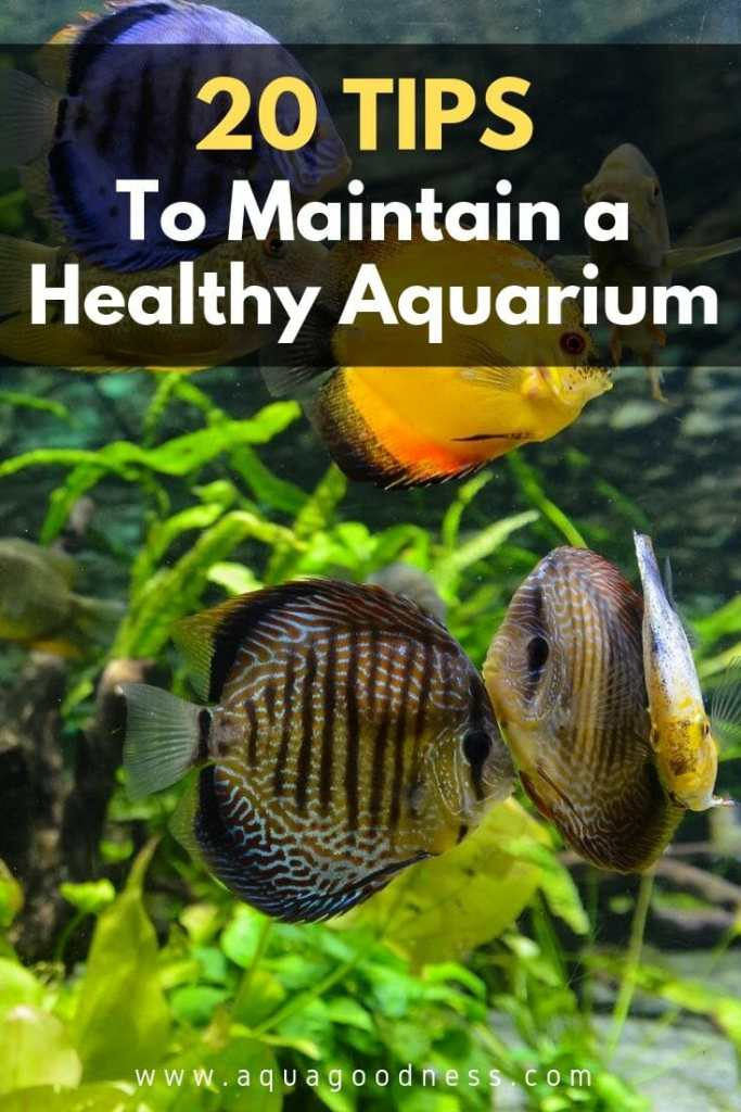 Tips to Maintain a Healthy Aquarium