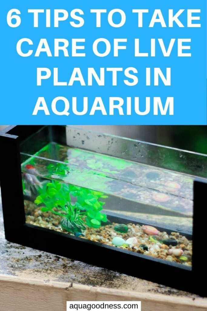 Tips to Take Care of Live Plants in Aquarium