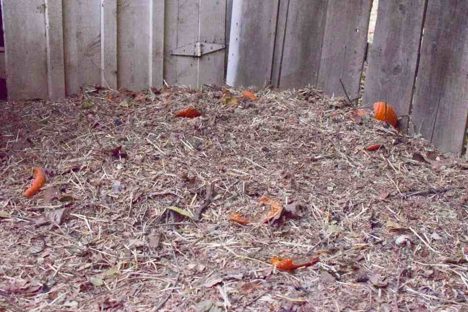 Compost Pile from backyard chicken droppings
