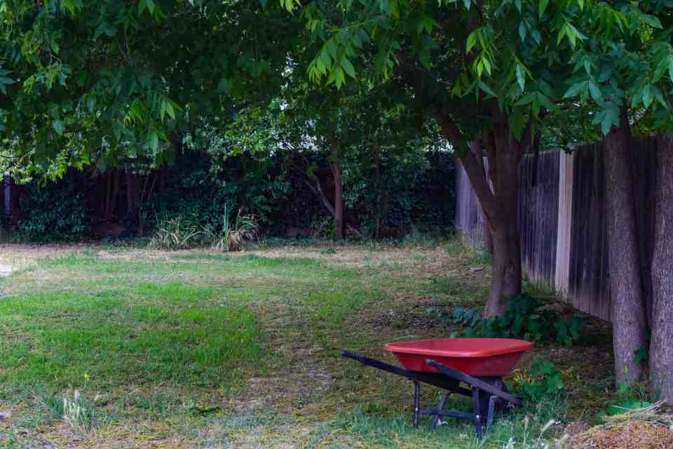 a grassy lawn with trees and a wheel barrow during quarantine