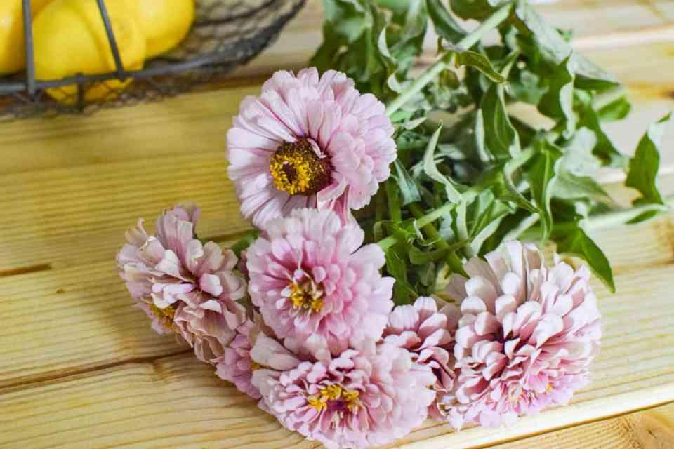 easy to grow flowers zinnias on a table