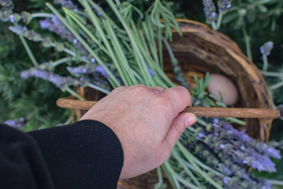 deeloping patience carrying a basket of lavender and eggs