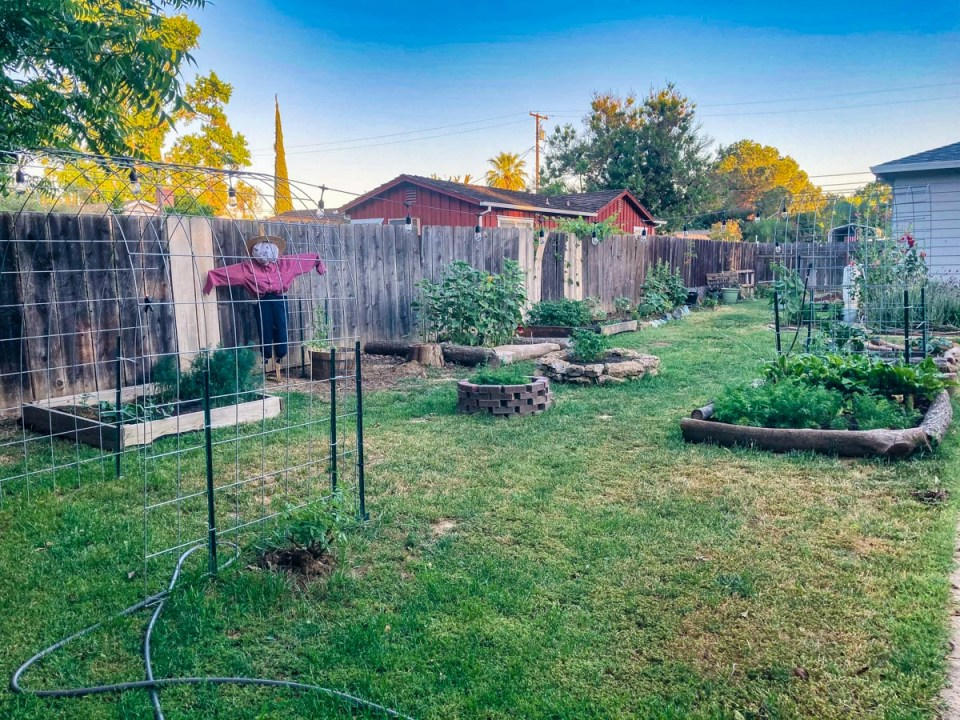 a tidy garden with several beds