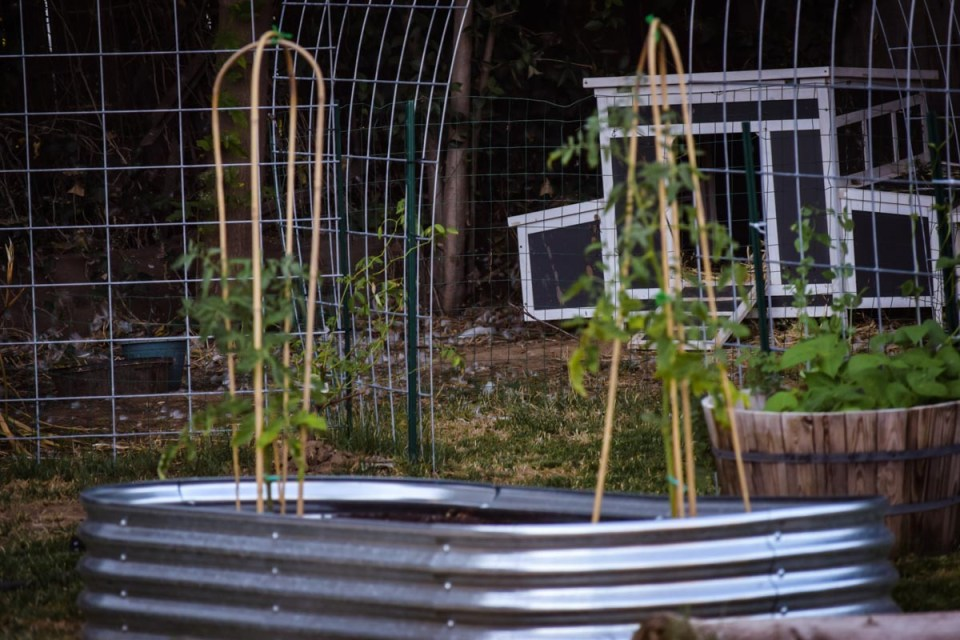 a metal garden bed with new plants