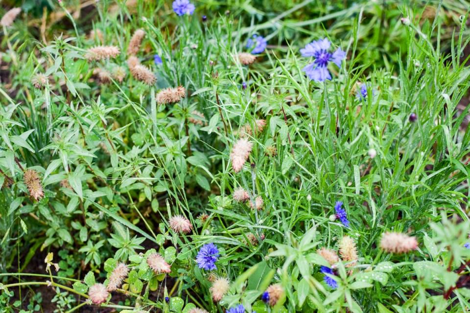 flowers in a planted wild garden
