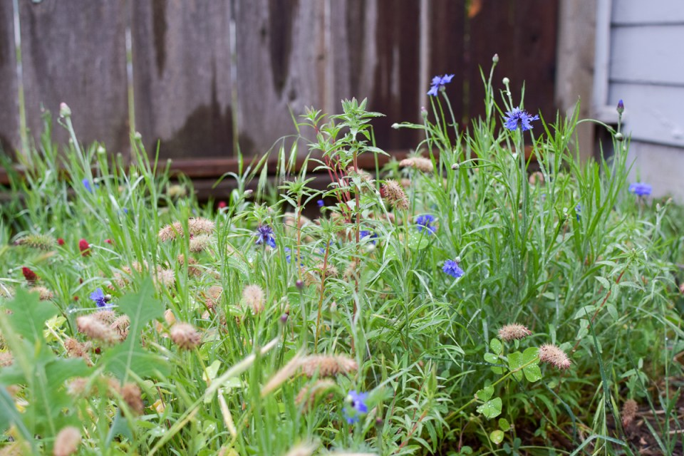wild flower meadow from planting a wild garden