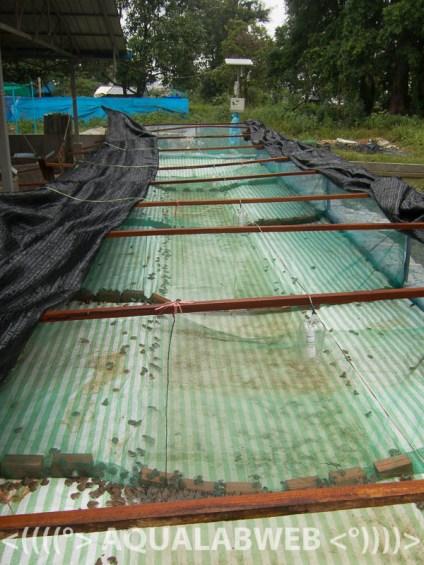 frog aquaculture
