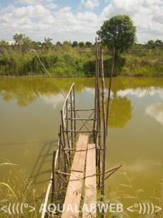fish pond at the aquaculture farm near Phnom Penh, Cambodia