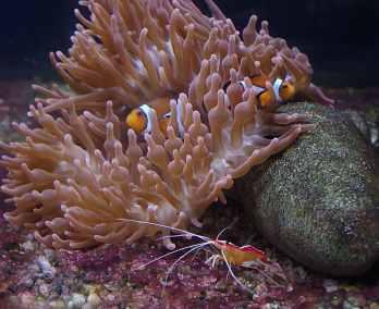 clownfish-955977