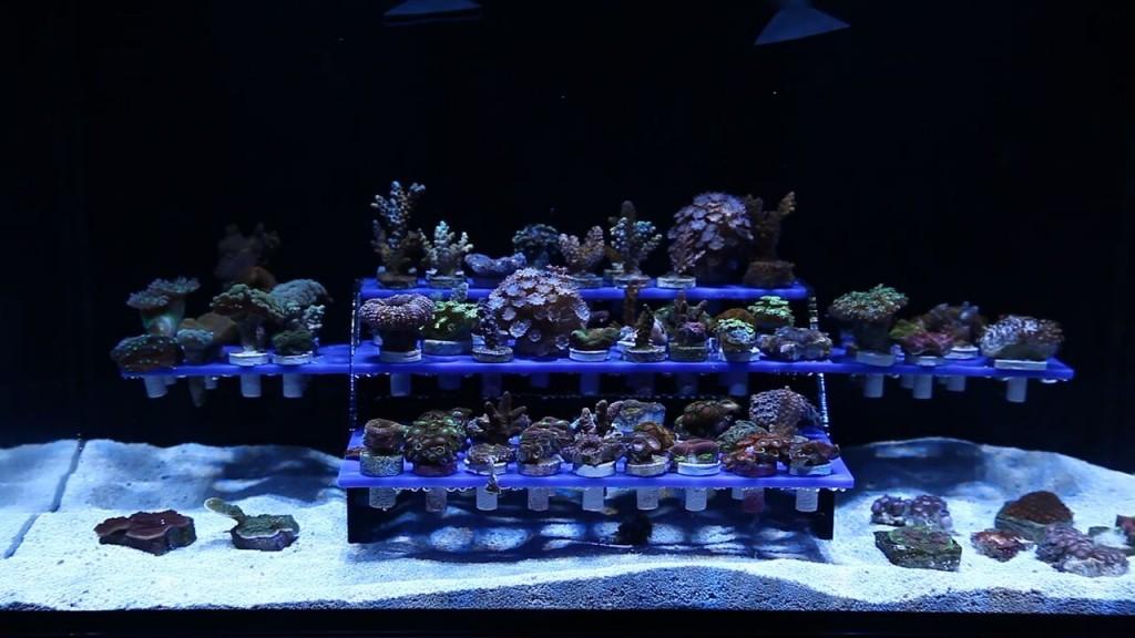 innovative marine has new frag reef