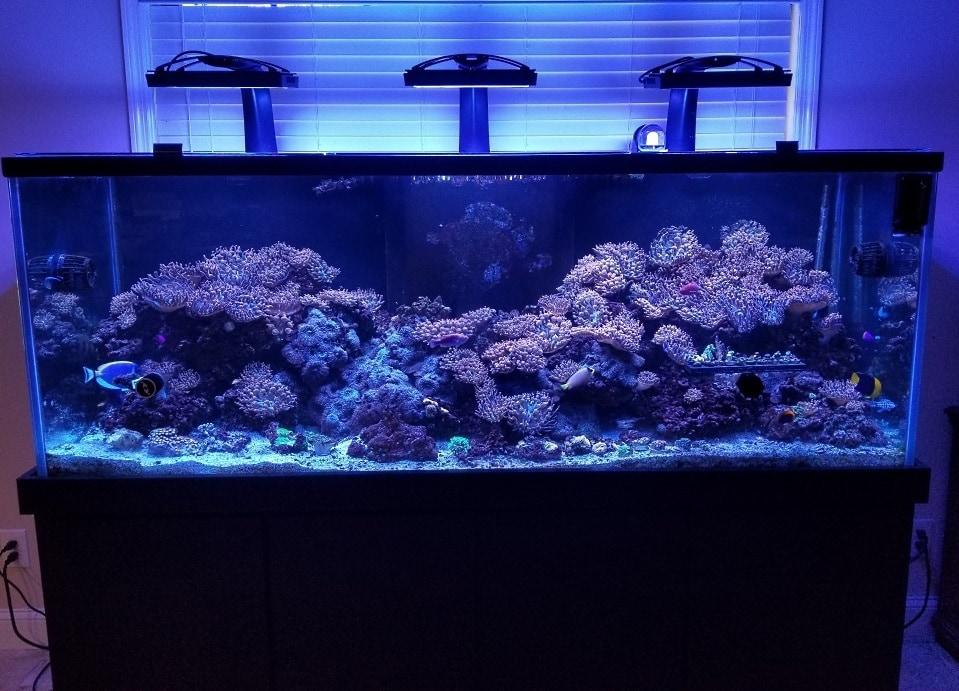 best led aquarium lighting to grow