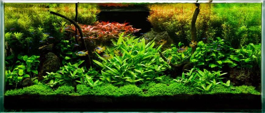 aquaplantscare.uk