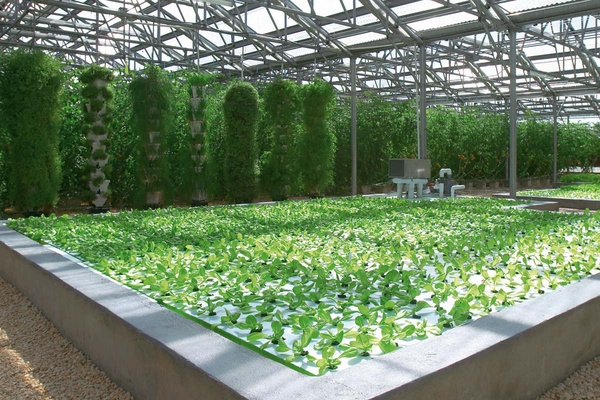 aquaponics greenhouse