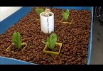 aquaponics growing bed,aquaponics bed