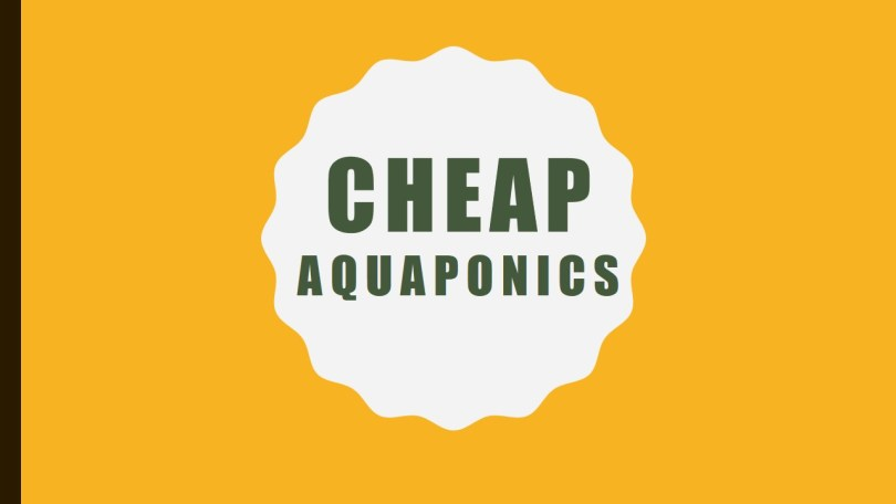 cheap aquaponics