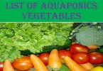 aquaponics vegetables list