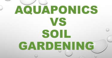 Aquaponics vs soil gardening