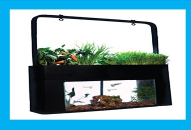 aquaponics in home decoration