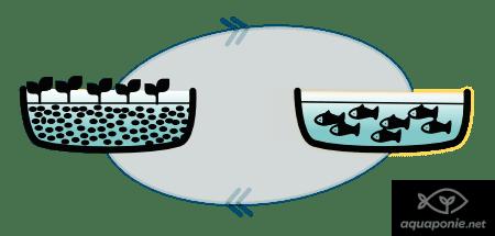 Système d'aquaponie en équilibre