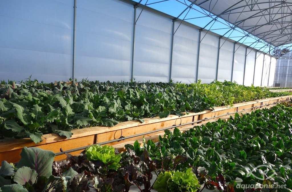 Notre micro-ferme basée sur l'aquaponie