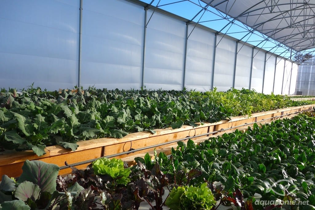 Micro-ferme en aquaponie