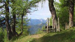 allee, bäume, trees, weg, path, aflenz