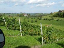 landschaft, landscape, weinstrasse, steiermark, steirische weinstrasse, styria