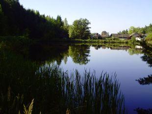 landschaft, landscape, paysage, trees, bäume, arbres, teich, pond, étang, sommer, summer, été, schilf, reed, roseau, spiegelung, reflection, reflet