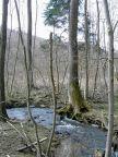 ufer, bank, shore, rive, bach, beck, creek, ruisseau, ru, wald, forest, bois, bäume, trees, arbres, thayatal