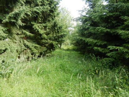 wald, forest, bois, bosco, foresta, selva, durchblick, view, vista, perspective, prospettiva, Hardegg