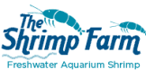the shrimp farm