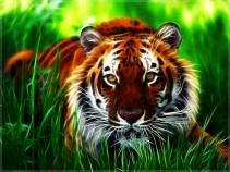 Tiger in Grass 808abe611d5da82b25324f67673eb2c2